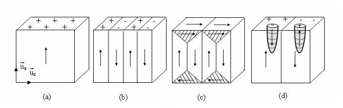 MADEA : Structure en domaines de Weiss